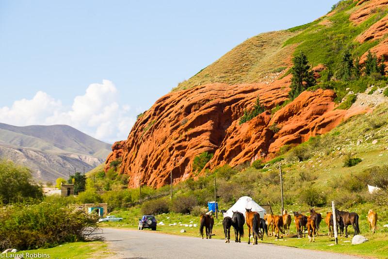 horses in Kyrgyzstan