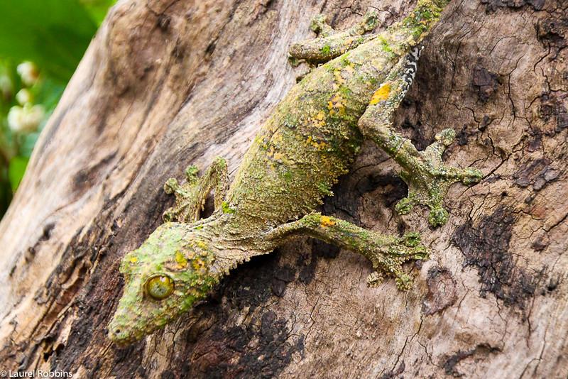 The Magic of Madagascar Ecotour: Lemurs and Other Wildlife