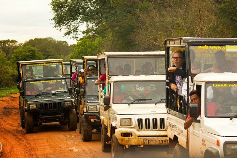 Jeeps at Yala, with everyone hoping to catch a glimpse of a leopard.