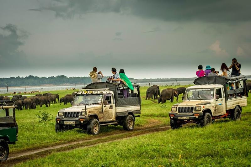 Safari jeeps observing elephant in the wild in Sri Lanka.