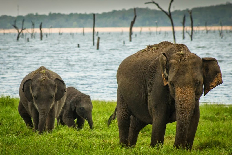 Sri Lanka is a great place to see elephant families.