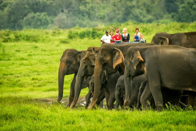 You can see elephants drinking from water holes in Kaudulla National Park in Sri Lanka.