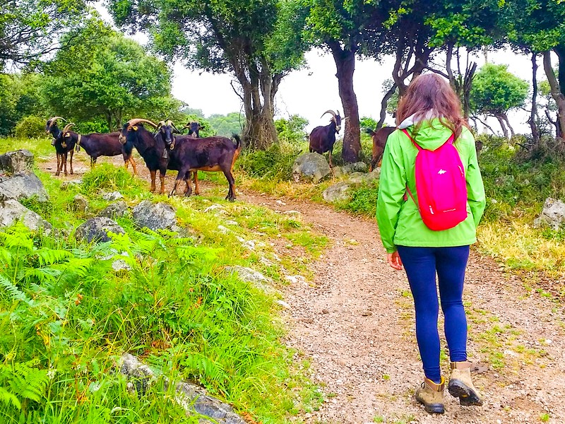 Walking a short section of the Northern Way from Castro Urdiales to Guriezo in Cantabria.