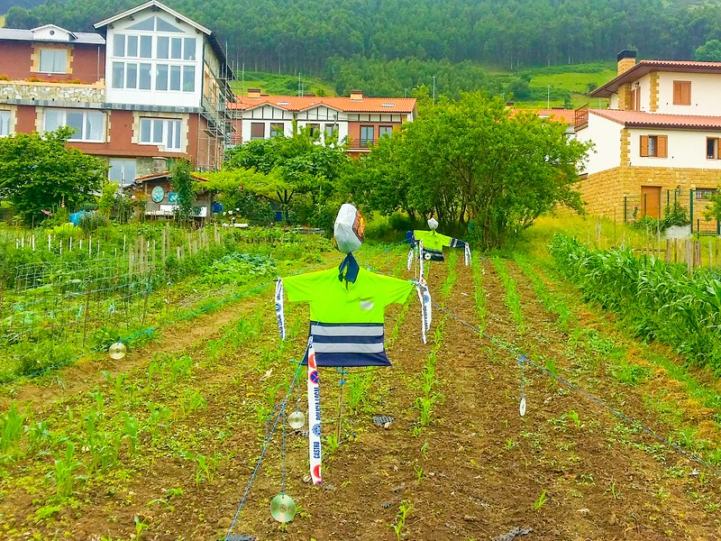 You get to see how real people live, even when walking a short section of the Northern Way in Cantabria.