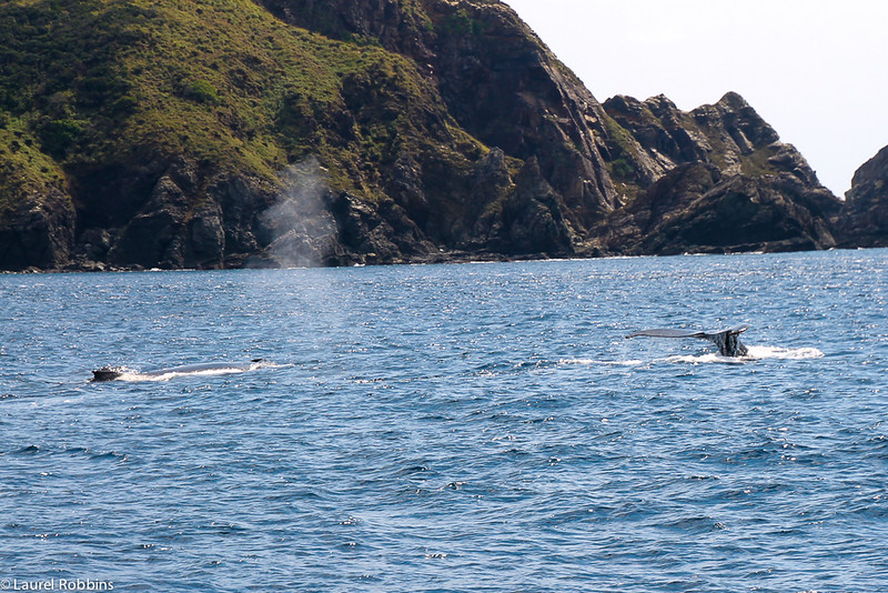 Ecotourists will love observing mother and calf humpbacks off Zamami Island in Okinawa, Japan.