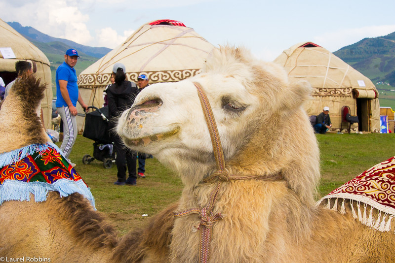 At Kyrchyn you get the chance to meet locals, like a Camel Shepherd.