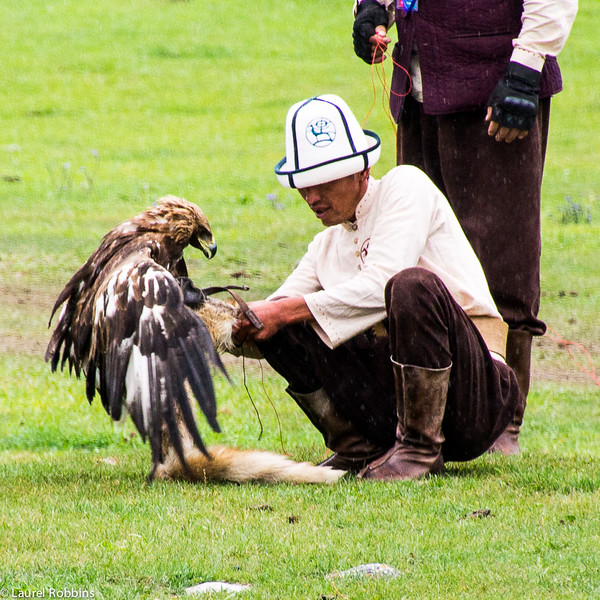 "A falconer and his bird after it successfully captures its ""prey"" at the World Nomad Games."