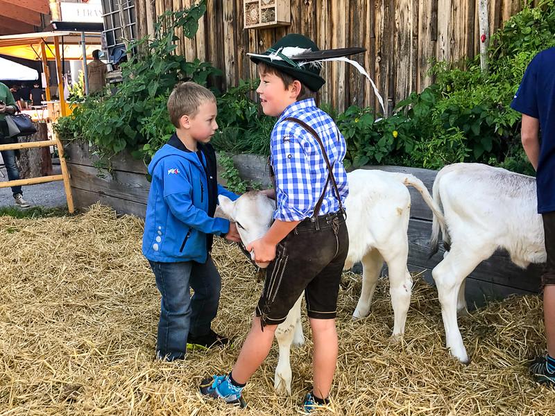 Locals from Zillertal feeding a calf.