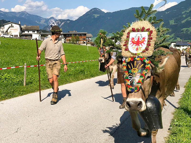 Almabtrieb is held in Zillertal and other alpine areas in Austria, Germany and Switzerland.