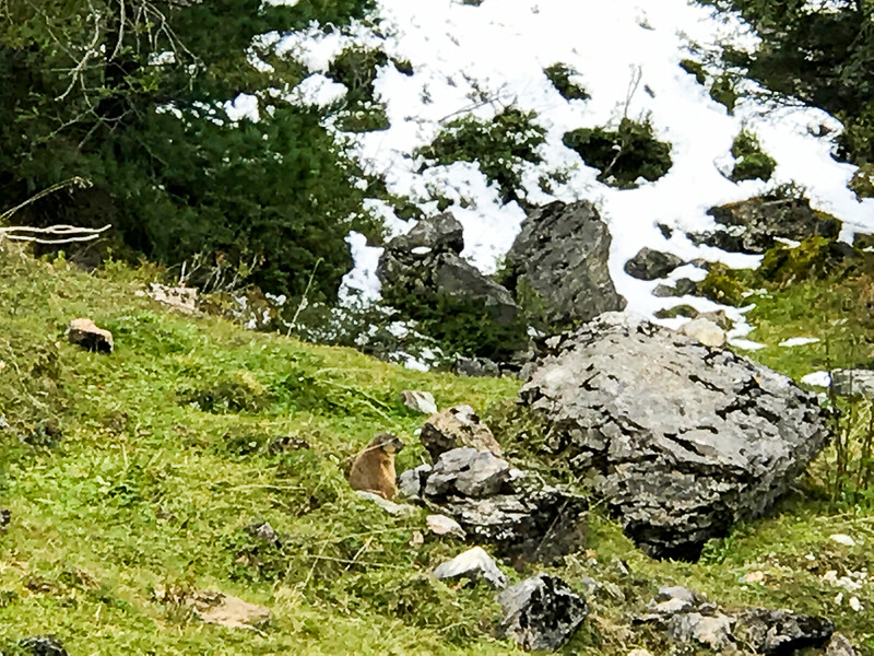 When hiking down from the Hintertux Glacier be on the lookout for marmots.