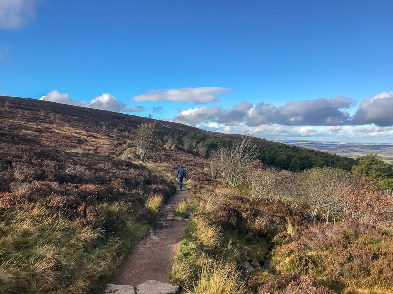 Hiker walking through the moorland in Bennachie