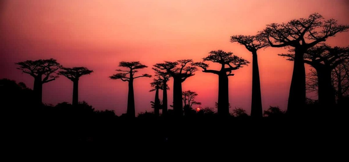 travel in Madagascar, what you need to know