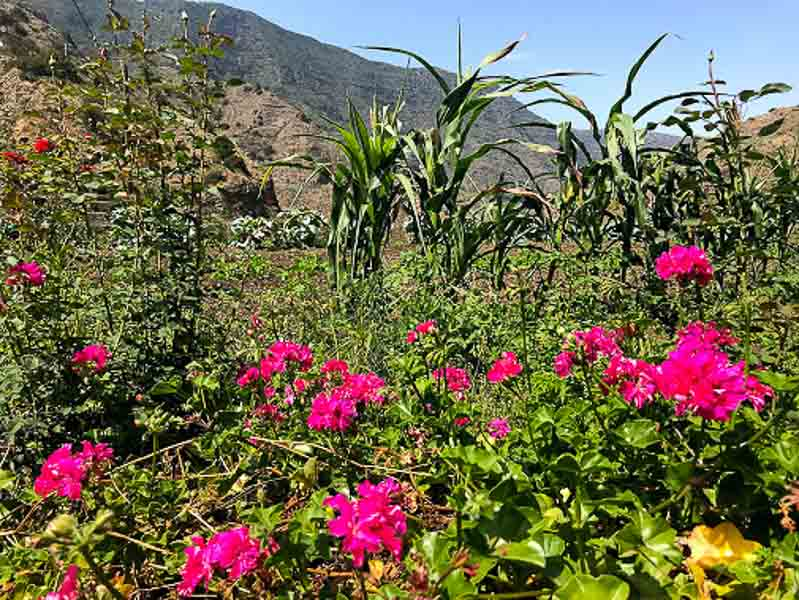Locals have beautiful flowers in their garden or pots in La Gomera.