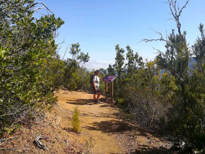 hiker in Garajonay National Park