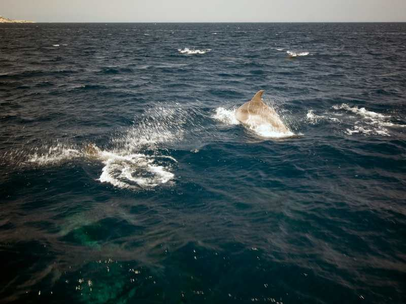 Dolphin tours are well-worth it if you are looking for adventure in Mallorca