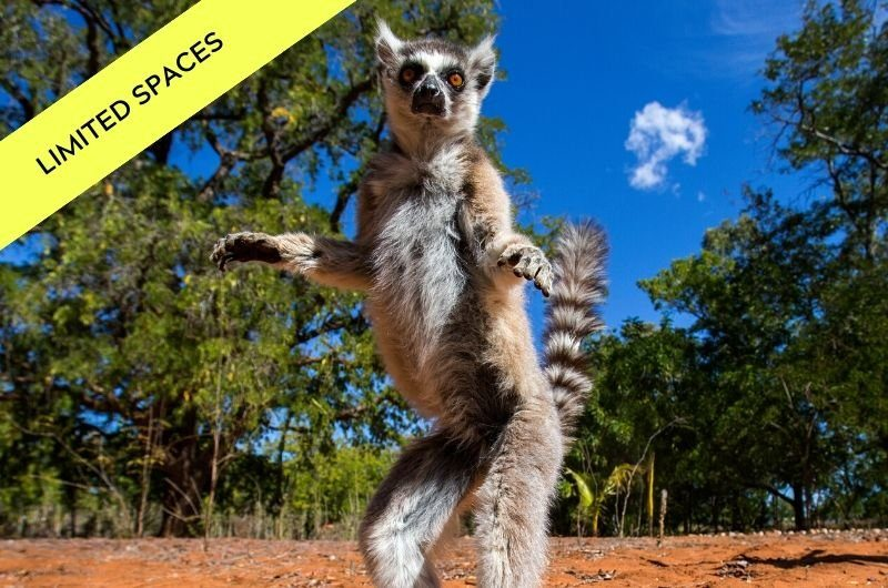 see lemurs on our Madagascar tour