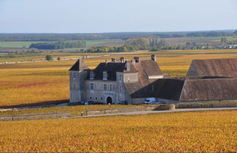 Enjoy the best of French vineyards on your next vacation