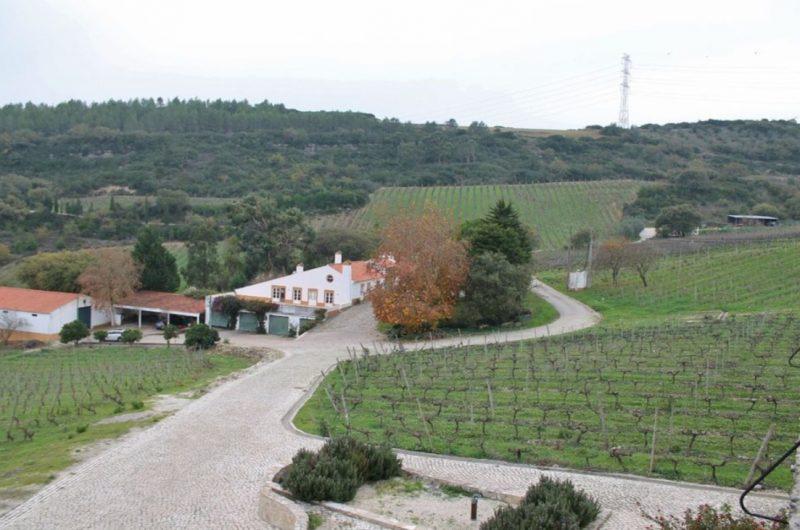 Take a stroll through beautiful vineyards in Portugal