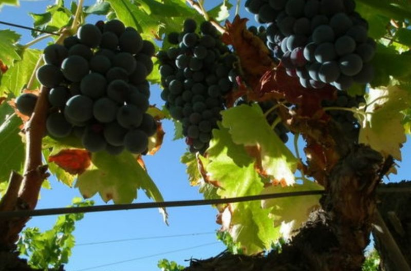 Priorat is a great place to explore on a wine tour