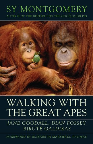 My favourite books about animals always includes orangutans as they're incredibly smart.