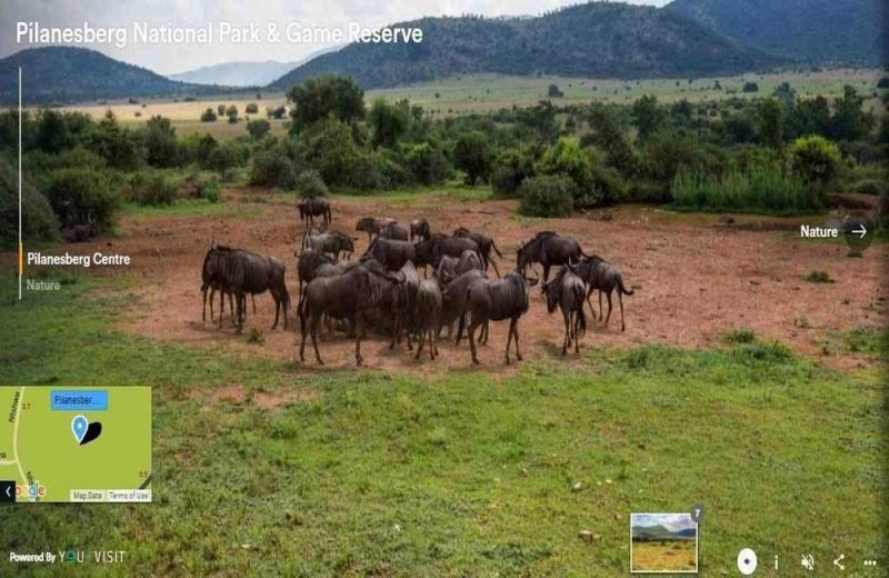 pilanesburg game reserve is a wonderful place to witness wildlife and this virtual tour will give you the opportunity to do this from home