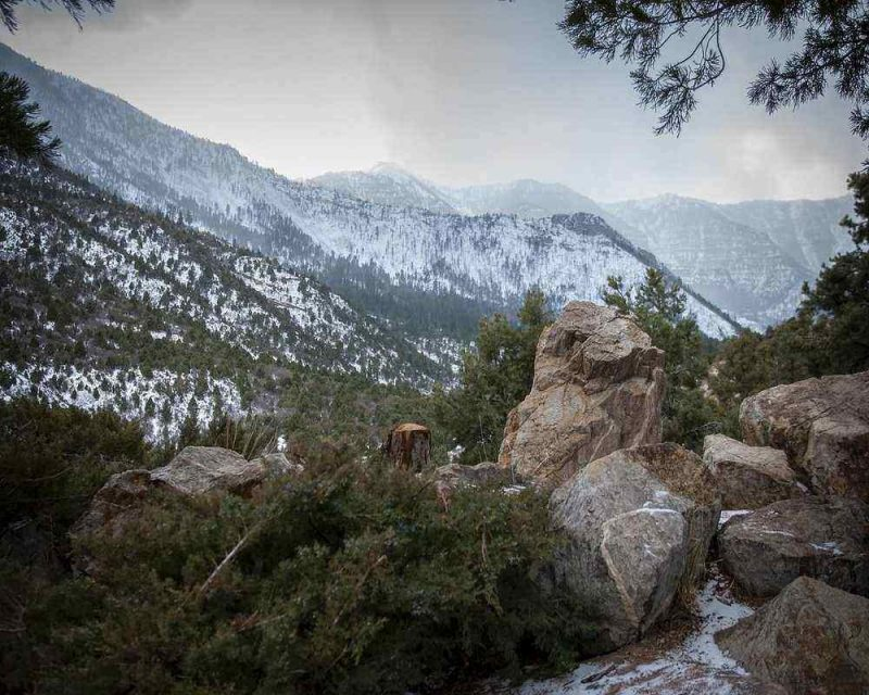 Mount Charleston is clos e to Las Vegas and offers a very different landscape than you would expect.