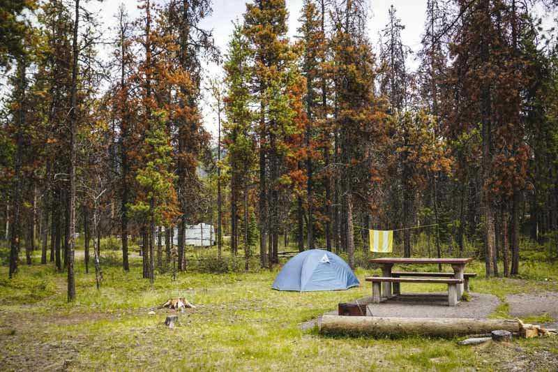 Camping is a great way to experience Jasper National Park