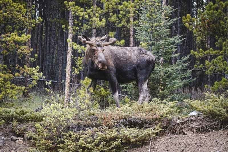 During warmer months you will be sure to see a diverse range of wildlife. Including Moose!