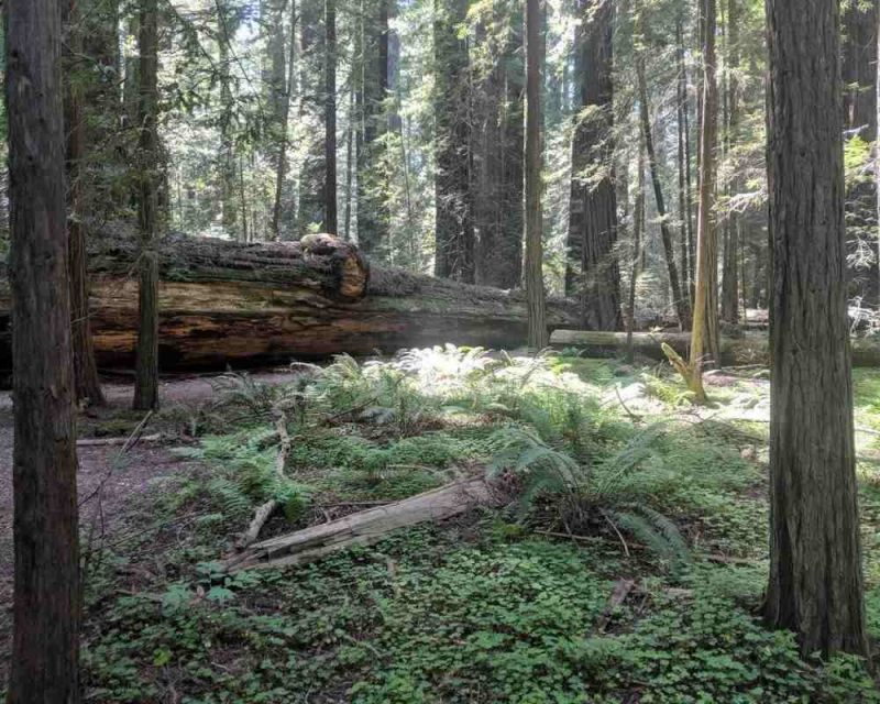Take the perfect road trip adventure in Northern California