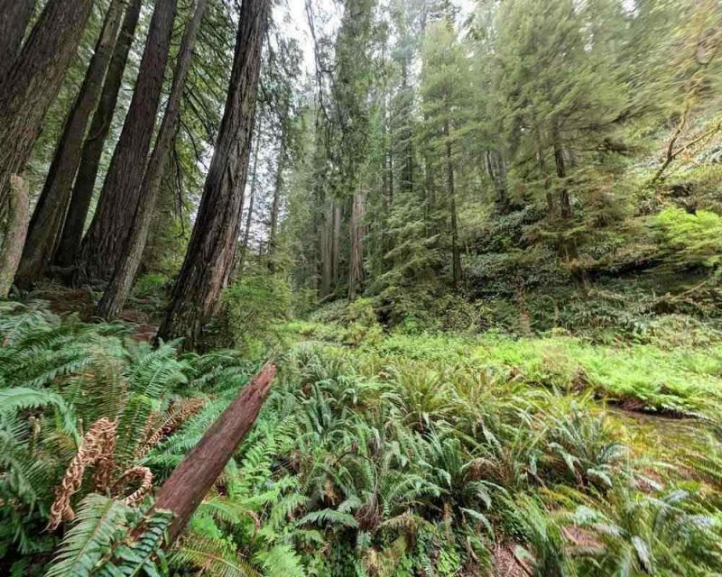 The Grove of Titans is the perfect place to take a hike and enjoy the scenery and marvel at the wooden giants that this area has to offer.