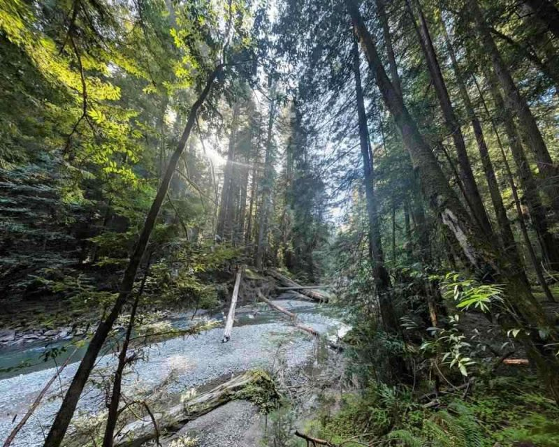 Rockefeller Forest is another fascinating stop to make in Northern California.