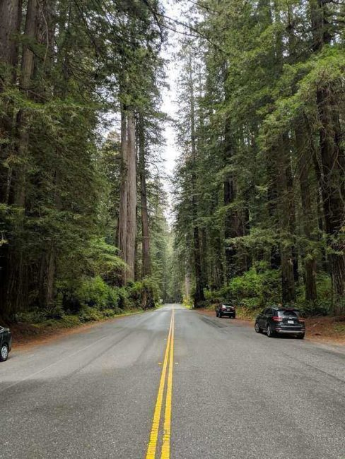 Newton B. Drury Scenic Parkways is one of your last stops on this road trip. It is the perfect way to end off the perfect vacation in Northern California