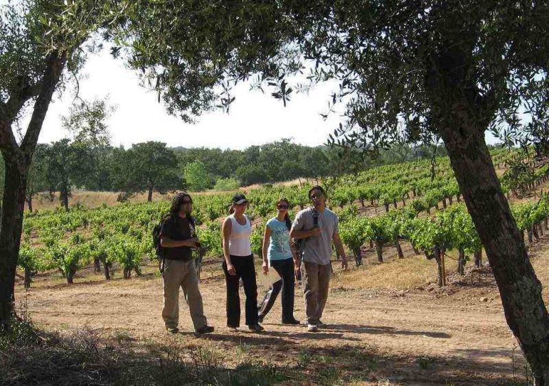 Hiking in California Vineyards