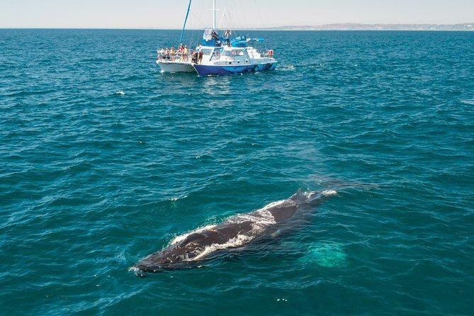 Try out whale watching is a great way to spend your time.