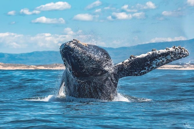 Whale watching is a great activity to try in Monterey
