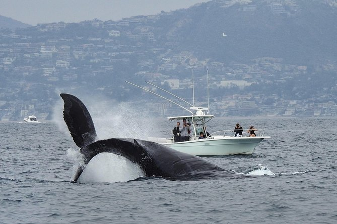 Whale watching is a great adventure in California