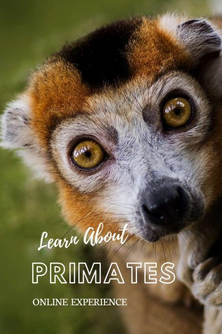 love primates? check out my online experience