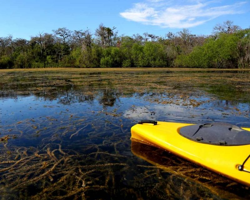 Kayaking is one of the best things to do in the Everglades