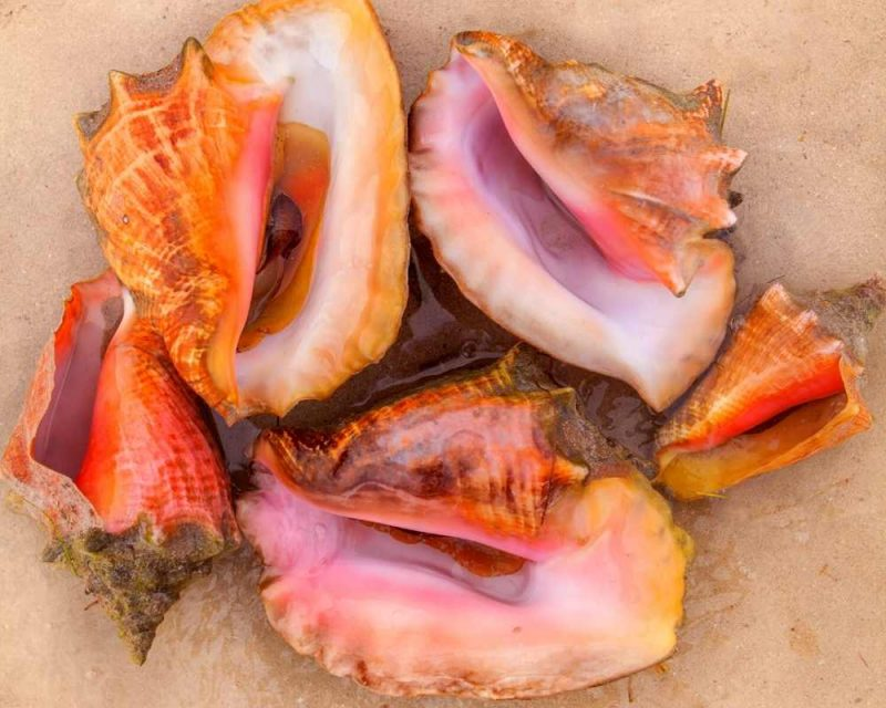 Sea shells can be found on several beaches in Ten Thousand Islands.