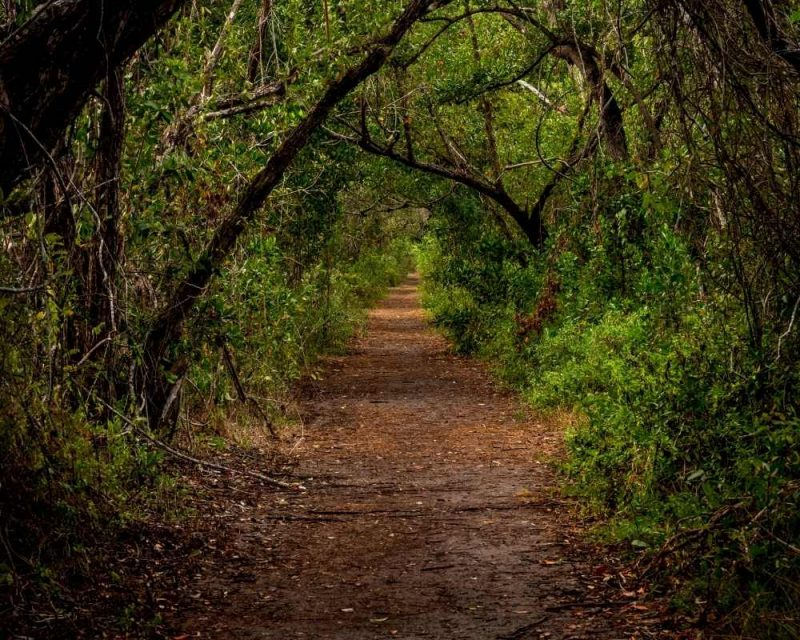 Traverse a mangrove covered path on the Snake Bight Trails. It's one of the best things to do in the Everglades.