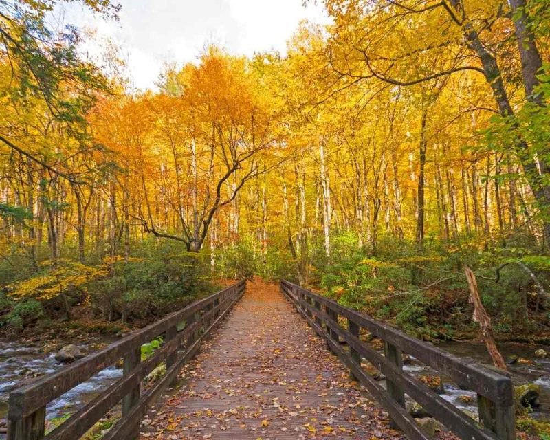 The Kephart Prong Trail is magical during Fall.
