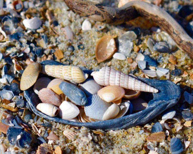 Sea shells on the beach.