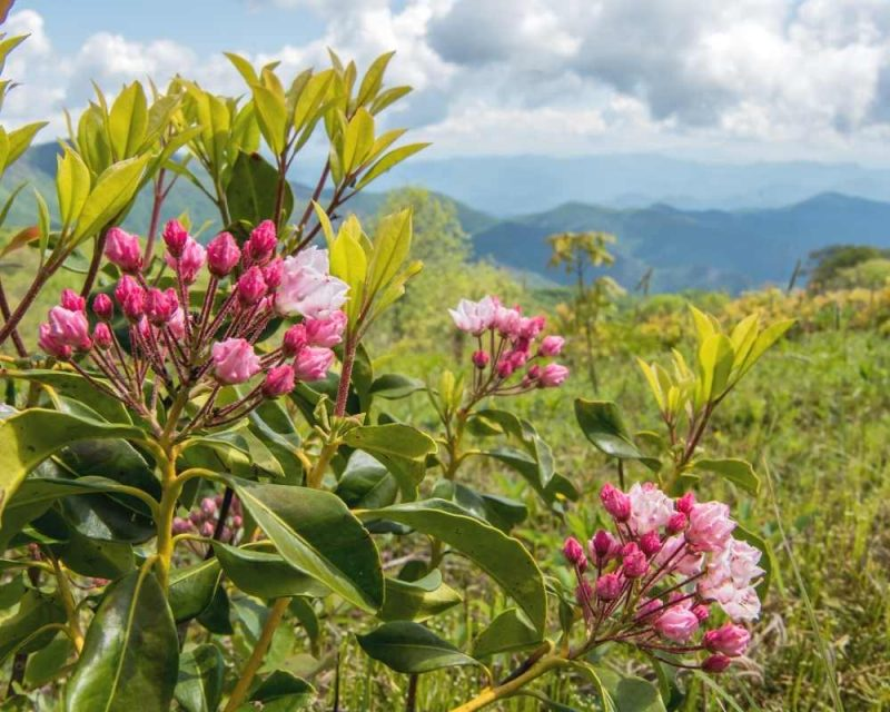 Hike up to the top of Silers Bald and be amazed by the wildflowers.