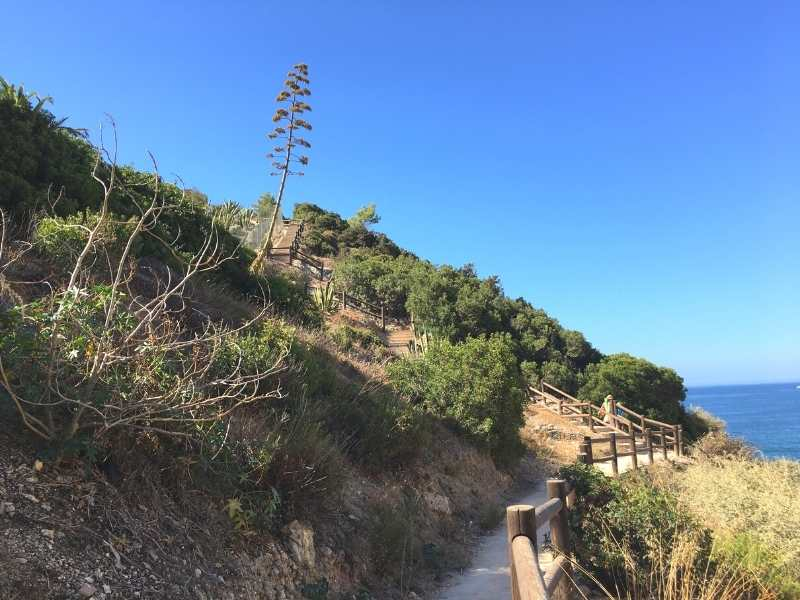 hike among lush vegetation with gorgeous ocean views in Algarve