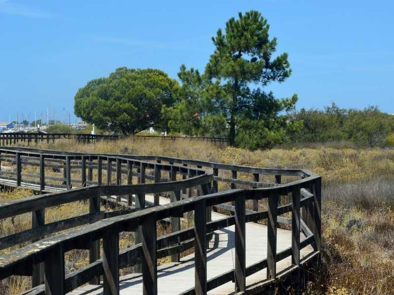Ria Formosa Natural Park is a paradise for bird watching in the Algarve