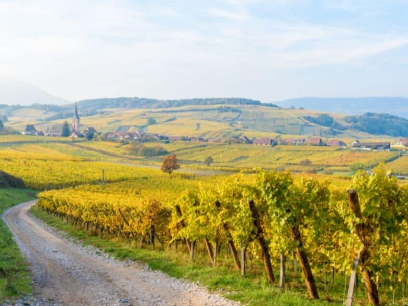 A mix of French and German wine culture await you on this great wine tour